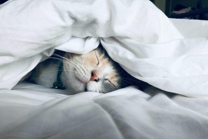 ホームページを制作して、自分が寝てても稼ぐ方法【職種別】